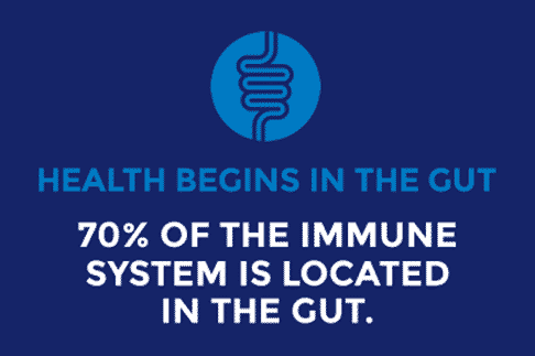 Gut health infographic stating that 70 percent of the immune system in located in the gut